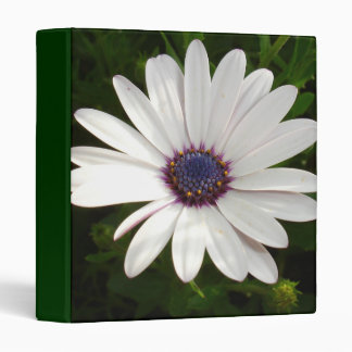 Beautiful Osteospermum White Daisy Binder
