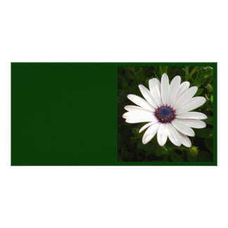 Beautiful Osteospermum White Daisy Card