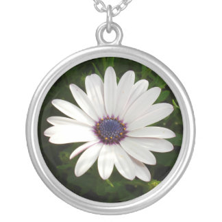 Beautiful Osteospermum White Daisy Silver Plated Necklace