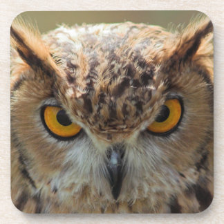 Beautiful Owl Beverage Coaster