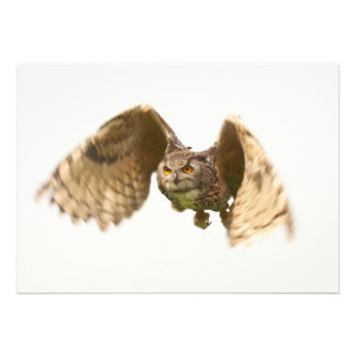 Beautiful Owl Invitation