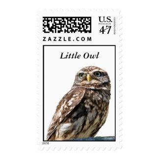 Beautiful owl photo portrait postage stamp