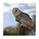 Beautiful Owl Tile