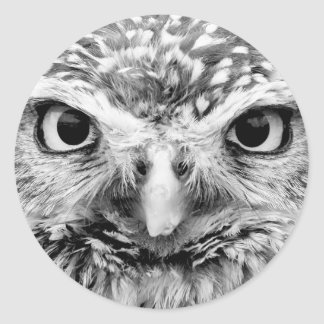 Beautiful Owl Wildlife Photo Gifts Round Stickers
