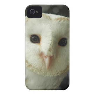 Beautiful Owls Face Iphone 4 Case-Mate Barely Ther