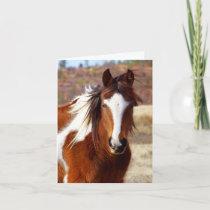 Beautiful Paint Horse Birthday Cards