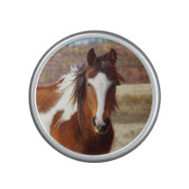 Beautiful Paint Horse Bumpster Speaker