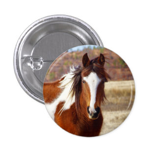 Beautiful Paint Horse Buttons