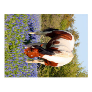 Beautiful Paint Horse in a field of Blue Bonnets Post Card