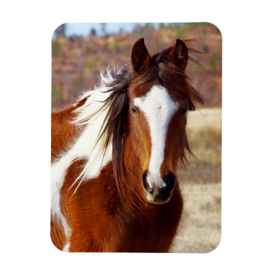 Beautiful Paint Horse Magnets
