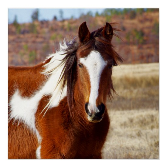 Beautiful Paint Horse Perfect Poster