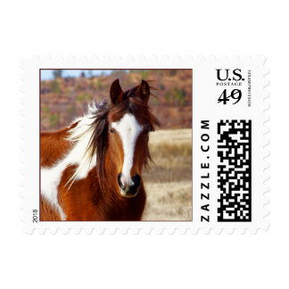 Beautiful Paint Horse Postage Stamps