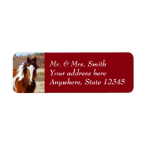 Beautiful Paint Horse Return Address Labels