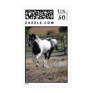 Beautiful Paint Pinto Horse Postage