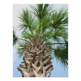 Beautiful Palm Tree and Blue Sky Poster