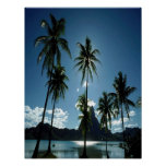 Beautiful palms, clouds, sky & water poster
