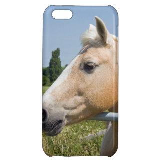 Beautiful Palomino Horse Case For iPhone 5C