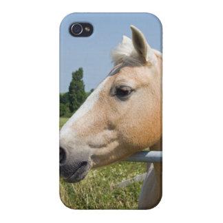 Beautiful Palomino Horse iPhone 4/4S Cover