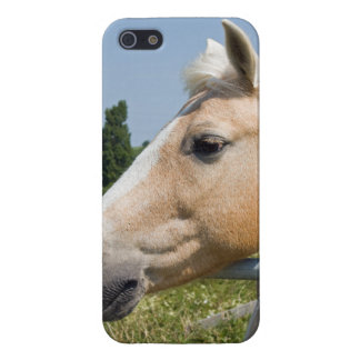 Beautiful Palomino Horse Case For iPhone 5