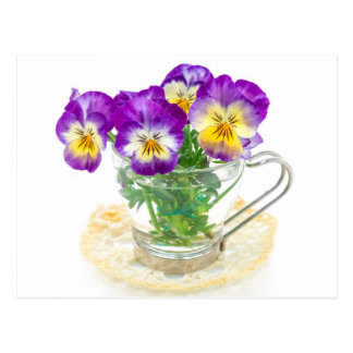beautiful pansy flowers isolated in a cup postcard