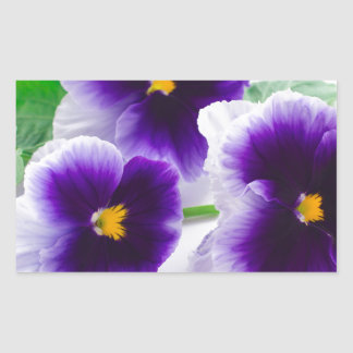 beautiful pansy flowers isolated ON white backgrou Rectangular Sticker