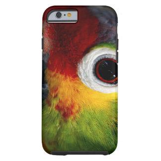 Beautiful Parrot Tough iPhone 6 Case