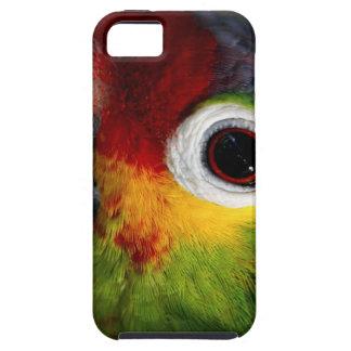 Beautiful Parrot iPhone 5 Case