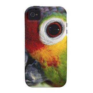 Beautiful Parrot iPhone 4/4S Case