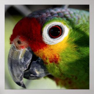 Beautiful Parrot Poster