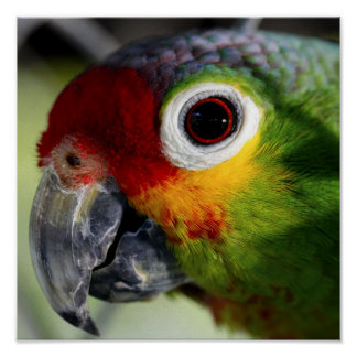 Beautiful Parrot Posters