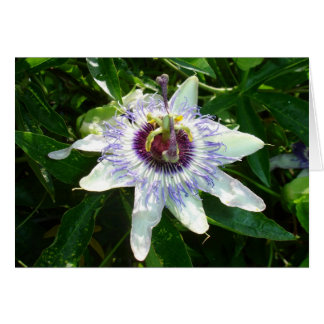 Beautiful Passion Flower With Garden Background Greeting Cards