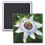 Beautiful Passion Flower With Garden Background Fridge Magnet