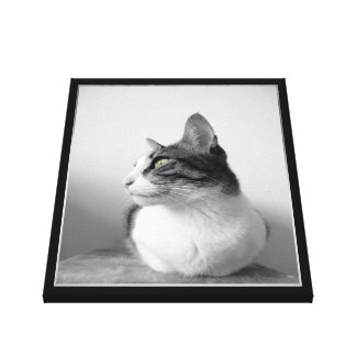 Beautiful Peaceful Tabby Cat with Green Eyes Canvas Print