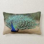 Beautiful Peacock American MoJo  Lumbar Pillows