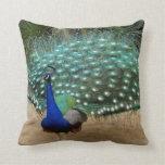 Beautiful Peacock American MoJo Pillows