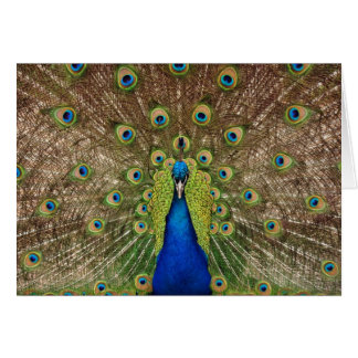 Beautiful peacock and tail feathers print card