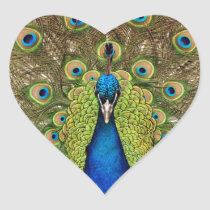 Beautiful peacock and tail feathers print heart sticker