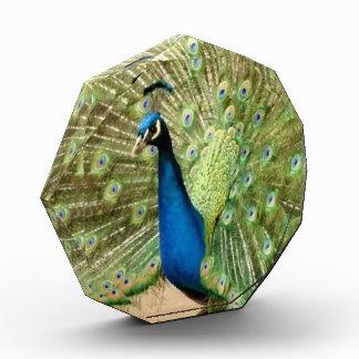 Beautiful Peacock Award