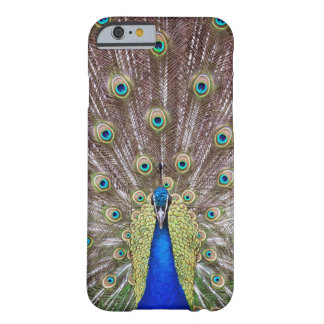Beautiful peacock barely there iPhone 6 case