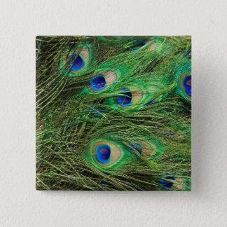 Beautiful Peacock Button
