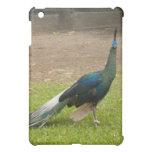 Beautiful Peacock Case iPad Mini Case
