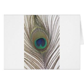Beautiful Peacock Designs Card