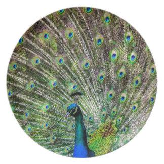 Beautiful Peacock Dinner Plate