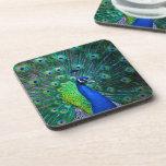 Beautiful Peacock Drink Coasters