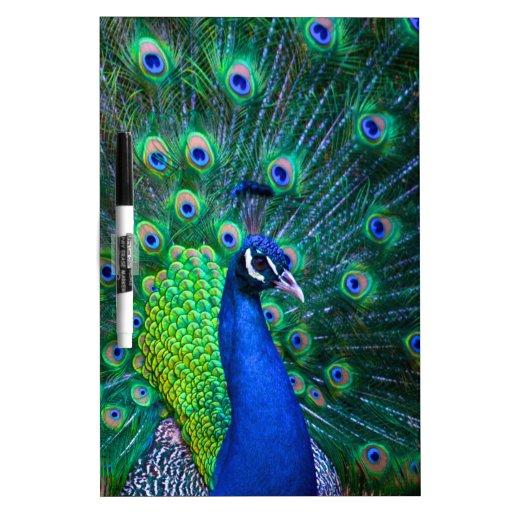 Beautiful Peacock Dry-Erase Whiteboards