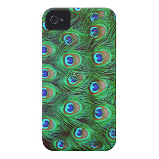 Beautiful Peacock Feathers Blackberry Bold Cover