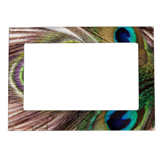 Beautiful Peacock Feathers Magnetic Picture Frame