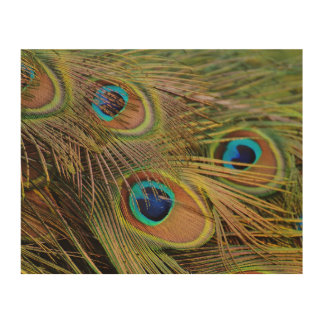 Beautiful Peacock Feathers Wood Print