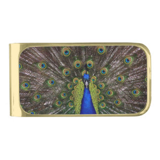 Beautiful Peacock Gold Finish Money Clip