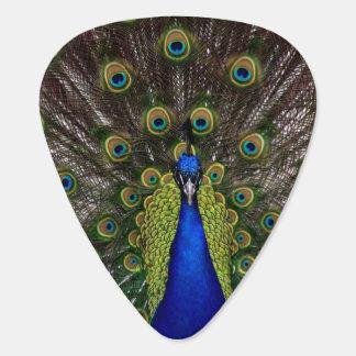 Beautiful Peacock Guitar Pick